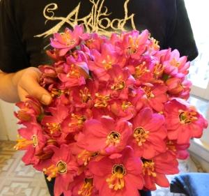 Second Passion Flower Harvest