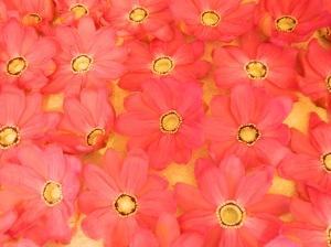Rings of Petals
