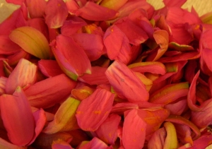 Passion Flower Petals Ready for Drying