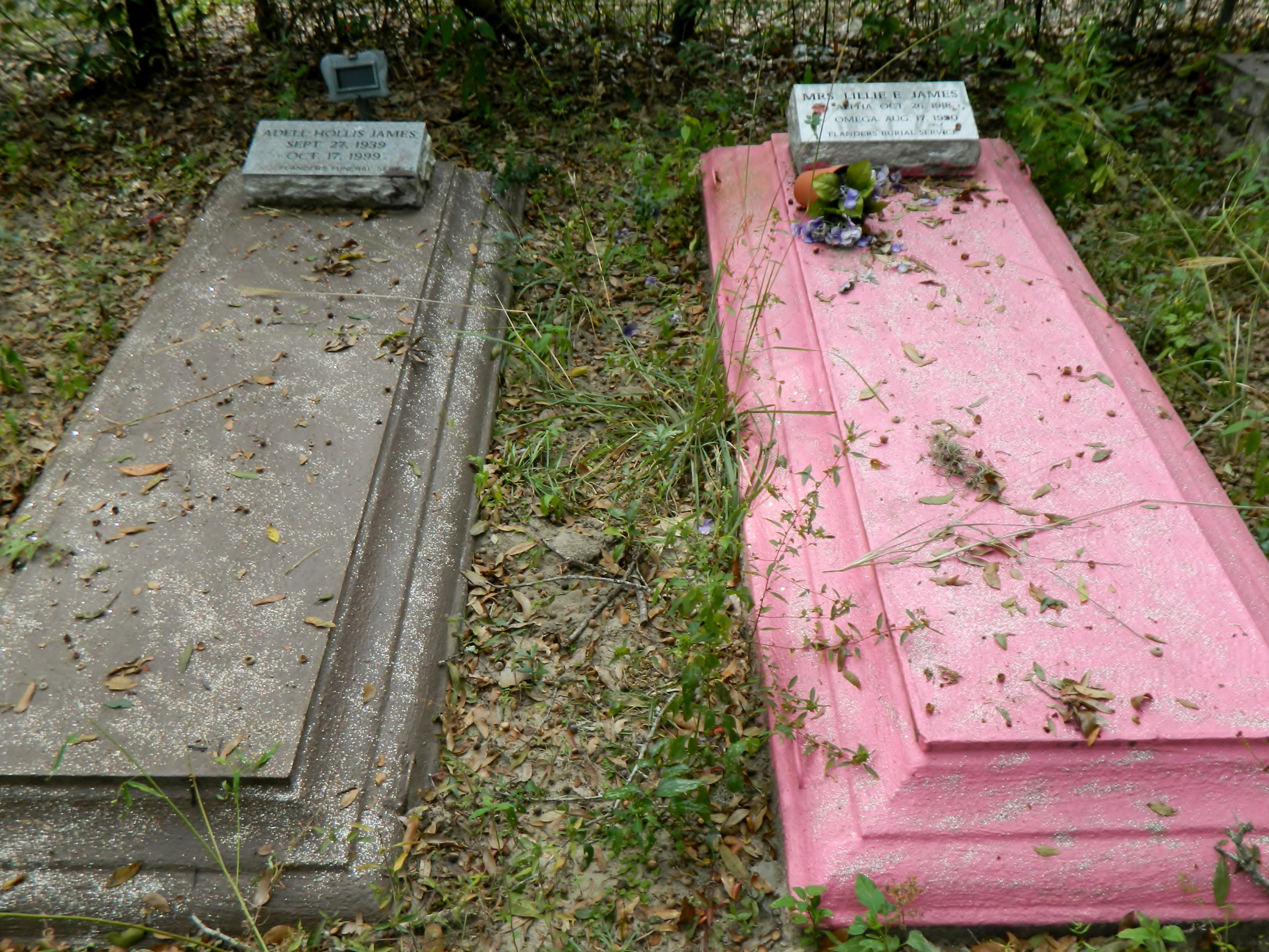 http://candlesmokechapel.files.wordpress.com/2012/11/purple-and-pink-graves.jpg
