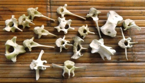 Bone Collecting at Candlesmoke Chapel